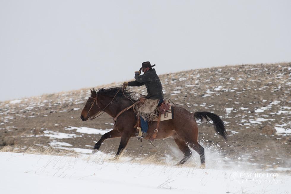 Montana 2018-231